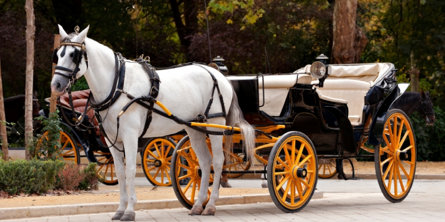 Activities in NYC, Carriage Ride in Central Park