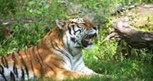 New York Attractions | Bronx Zoo