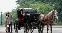 Activities in NY, Carriage Rides in Central Park