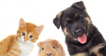 NYC Events | New York Pet Expo