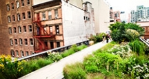 NY Activities, Walk the High Line